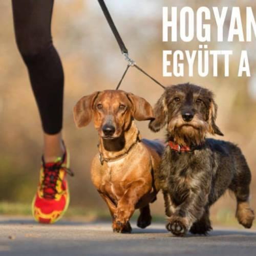 Hogyan fussunk együtt a kutyánkkal?