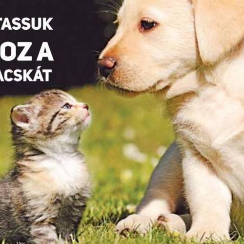 Hogyan szoktassuk egymáshoz a kutyát és a macskát?!