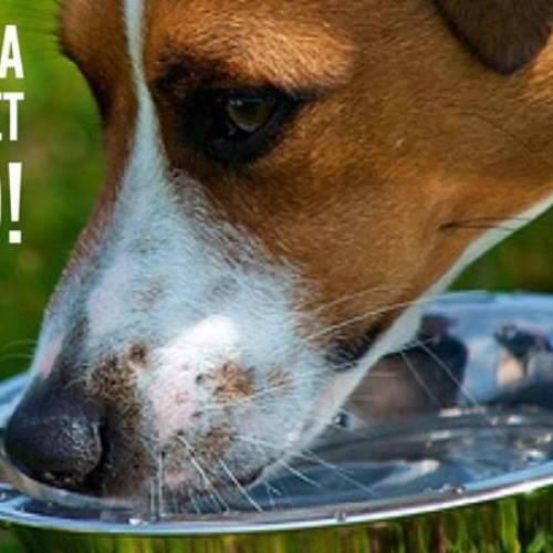 Mit csinálj, ha nem iszik eleget a kutyád?