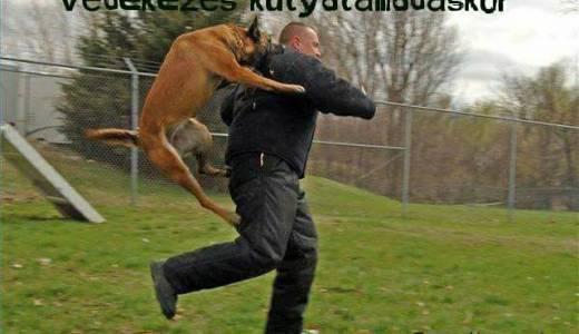 Védekezés kutyatámadáskor